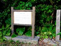 多良間島の運城御嶽のフクギ並木 - フクギだけではなく植物群落になっているかも