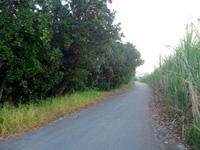 多良間島の多良間島の抱護林 - 壁のように木々がそびえ立っています