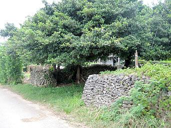 多良間島のフシャトゥガー「綺麗な石積みの壁があります」
