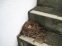 多良間島の貯水塔からの景色 - 階段がありますが途中に鳥の巣も?