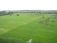 多良間島の貯水塔からの景色 - 島の西側の景色(牧場側)