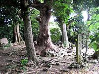 多良間島「シュレーウガン/ウガム゜」