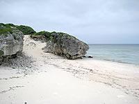 タカシパマトゥブリ