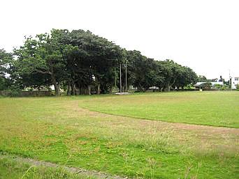 多良間島の多良間小の木「学校の木々はかなり立派です」
