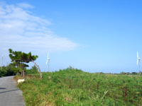 多良間島の旧多良間空港滑走路/可倒式風力発電「たらまる」/メガソーラー/多良間村ヤギ加工施設 - 2つの風車とヤギ?