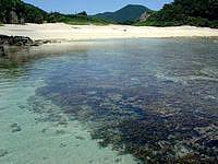 渡嘉敷島の阿波連ビーチ北の海 - 水の透明度は抜群です