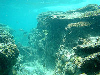 渡嘉敷島の阿波連ビーチ北のアウトリーフ