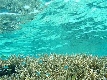 阿波連ビーチ〜ハナレ島の海の中