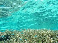 渡嘉敷島ハナレ島の阿波連ビーチ〜ハナレ島の海の中