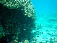 渡嘉敷島ハナレ島の阿波連ビーチ〜ハナレ島の海の中 - 中間地点には大きな珊瑚礁も