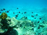 渡嘉敷島ハナレ島の阿波連ビーチ〜ハナレ島の海の中 - 深さは干満にもよりますが4〜5m程度