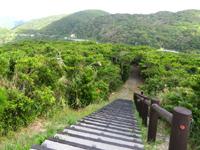 渡嘉敷島の照山展望台への道/森林公園 - 照山展望台まであと少し!