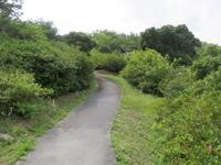 渡嘉敷島の照山-阿波連遊歩道 - 階段途中から見る景色も良い感じ