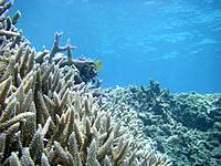 沖縄本島離島 渡嘉敷島の阿波連ビーチの海の中の写真
