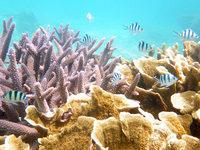 渡嘉敷島の阿波連ビーチの海の中の写真