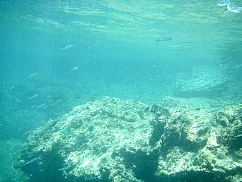 ウン島と渡嘉敷島の間の海の中