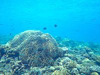 渡嘉敷島ハナレ島のハナレ島の海の中