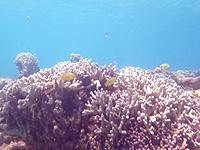 渡嘉敷島ハナレ島のハナレ島の海の中 - サンゴも魚も探さずに楽しめます