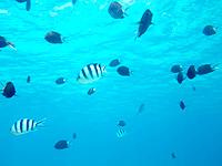 渡嘉敷島ハナレ島のハナレ島の海の中 - 魚は多いがこの理由は餌付け・・・
