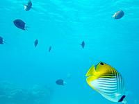 渡嘉敷島ハナレ島のハナレ島の海の中 - 餌付けは生態系を壊すので絶対に止めよう