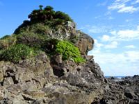 徳之島のゴリラ岩/南原の立ち岩