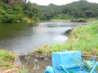 徳之島のアマミノクロウサギ観察小屋/南ダム - 小屋のすぐ脇には小さなダムがあります