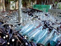 渡名喜島の渡名喜番所渡名喜小中学校跡のフクギ群 - この泡盛の瓶の山はある意味芸術的w