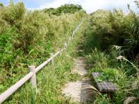 渡名喜島の西森園地遊歩道/登山道 - 後半は雑草だらけで歩くのも一苦労