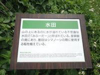 渡名喜島の水田/みふーだー - 案内が無いと水田の存在も気づかないかも?