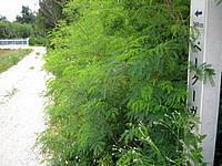 津堅島のキガ浜 - この標識があるもののペークーガマ自体はどこ?