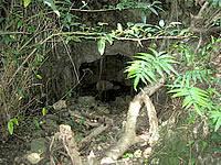 津堅島のクボウグスクの植物群落