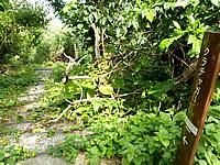 津堅島のクラチャガー