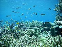 八重干瀬の八重干瀬の魚たち