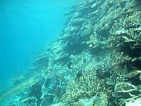 八重干瀬の八重干瀬海中1 - 珊瑚礁の断崖絶壁