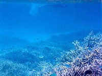 八重干瀬海中2