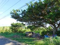 与那国島のあきおじのスイカ畑 - あの雰囲気はどうにかまだ残っています