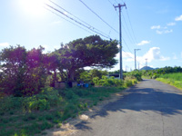 与那国島のあきおじのスイカ畑 - 空港の近くにあります