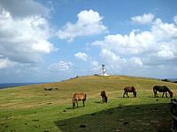 与那国島の東崎灯台 - 灯台と牧草と馬の織りなす光景