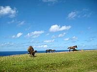 与那国島の東牧場 - 牧草地帯で休む馬や牛がいい感じ
