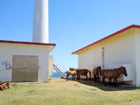 与那国島の東牧場 - 風車は止まっても小屋の影は有効活用(笑)