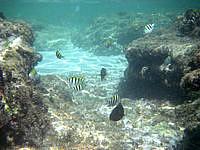 ダンヌ浜の海の中