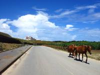 与那国島の南牧場線/Dr.コトーのタイトルバックの道/自衛隊基地整備 - 馬や牛も追いやられているのかも?