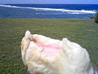 与那国島の手作りパンの店 パネス(営業再開)の写真