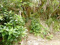 与那国島の人面岩/志木那島神社 - 遊歩道の草むら先にあるので分かりにくい