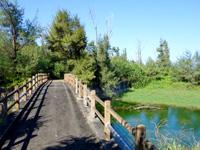 与論島の大金久海岸遊歩道 - 分岐点から左へ行くとすぐに橋があります
