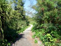 与論島の大金久海岸遊歩道 - 先へ行くほど悪路になる