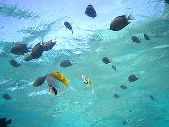 百合ヶ浜の魚たち