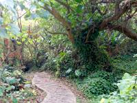 与論島の与論城跡登山道/遊歩道 - もののけの森のような雰囲気も!
