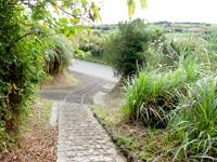 与論島の与論城跡登山道/遊歩道 - 先に見えるのがマラソンコース