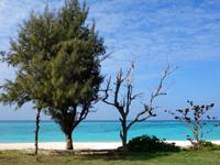 与論島のウドノスビーチ - 海沿いの木々がいい感じ